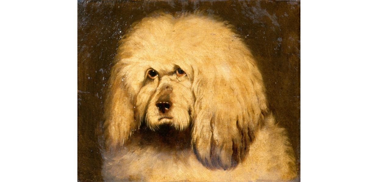A 19th century study of a dog's head